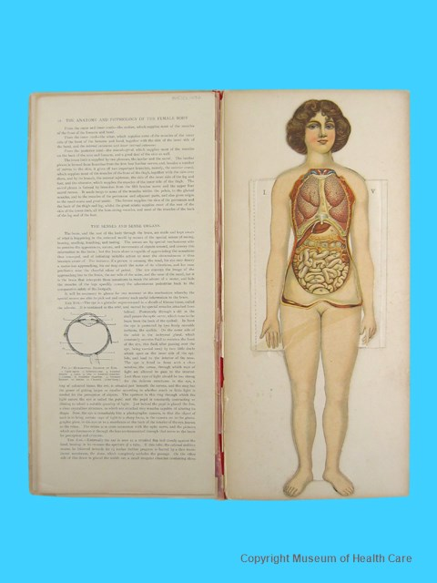 Baillieres Popular Atlas Of The Anatomy And Physiology Of The